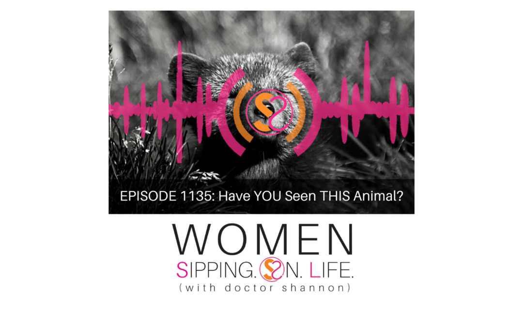 EPISODE 1135: Have YOU Seen THIS Animal?